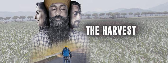 The Harvest