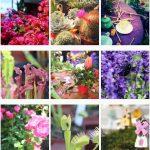 Perugia Flower Show 2018