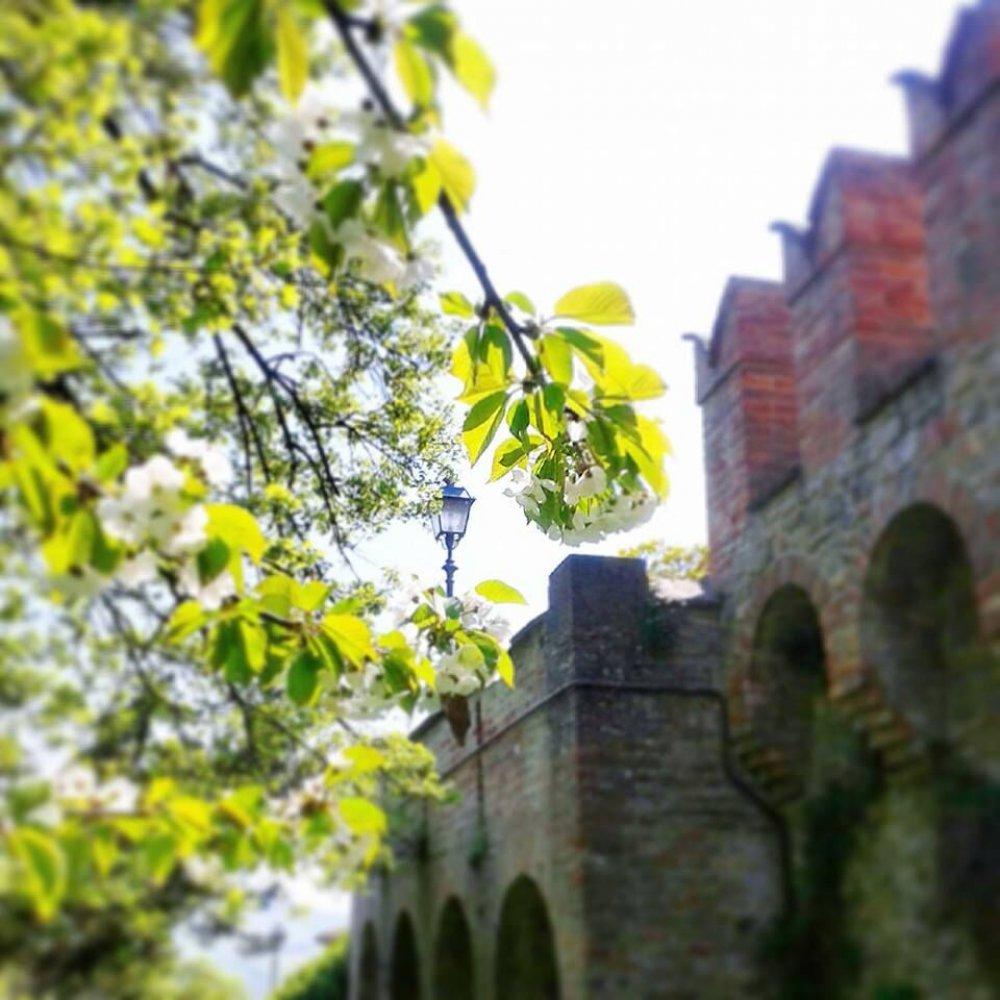 Oh che bel Castello - Alla scoperta del borgo di Castelvetro