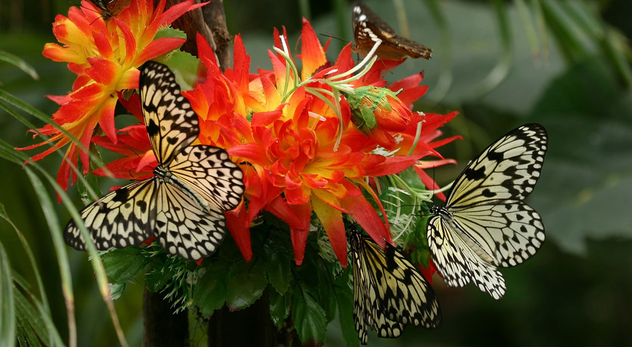Casa delle Farfalle & Co.