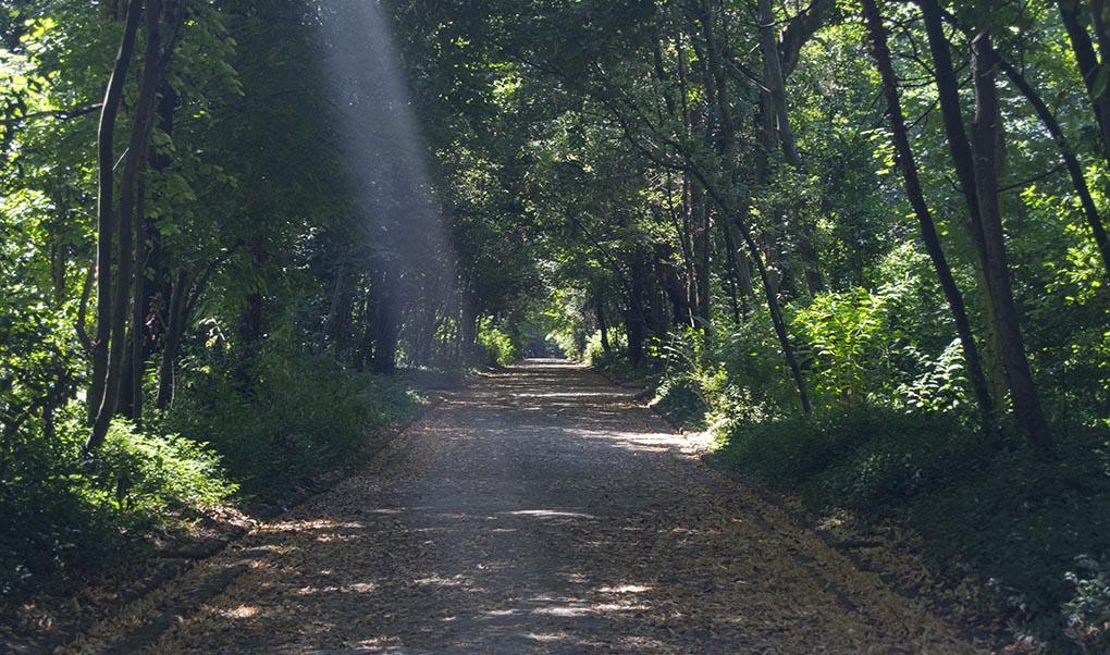 Un Bosco Reale per TUTTI - Respirando la Natura
