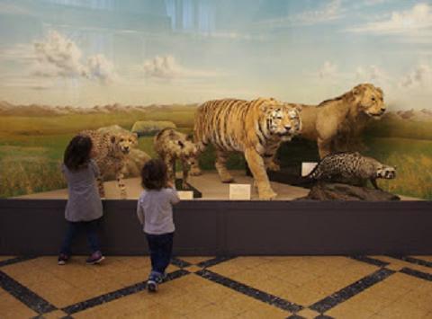 Animali per Gioco - Visita guidata per bambini e ragazzi