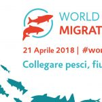 World Fish Migration Day 2018
