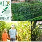 Dedalo, il labirinto di mais più grande d'Europa