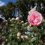 Perugia Flower Show - Winter Edition